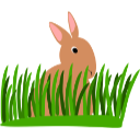 Picture of rabbit for boarding